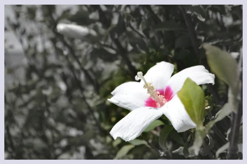 こころの花